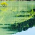 ダム湖の遅い春