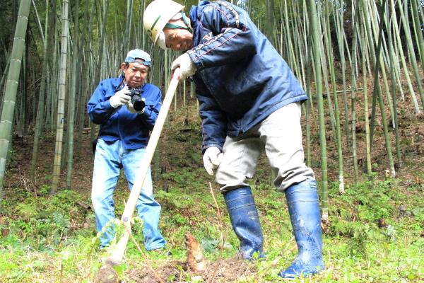 タケノコ掘り