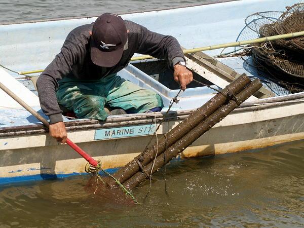 北潟湖のウナギ漁 (撮影=橘)